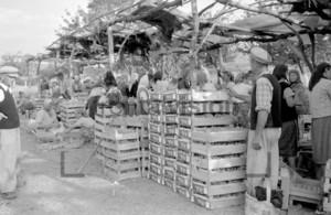 Traubenernte und Verkauf Bulgarien 1965 | Grape Vintage Bulgaria 1965