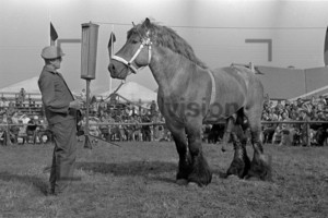 Pferdeshow in der DDR   Horseshow in the GDR