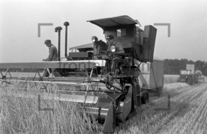 Combine harvester on a field: Historical image