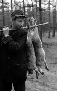 Geschossene Hasen
