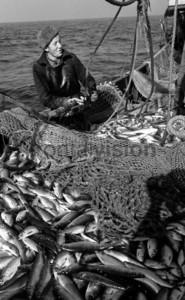 Frischer Fisch im Netz | Fresh fish in the net