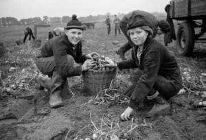 Kartoffelernte Jugendliche Erntehelfer | Potatoes harvest in 1964