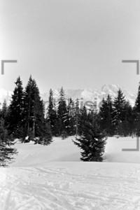 Winterblick Tannenbäume Alpen