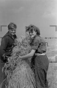 Young Seasonal harvest worker