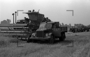 Combine harvester on a field
