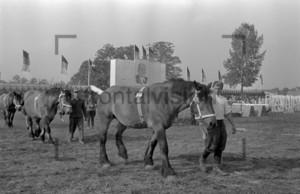 Pferdeshow in der DDR | Horse Show in the 1950er years