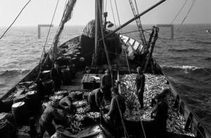 Fischkutter mit Fischladung auf hoher See | Fishing boat Baltic Sea