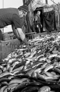 Fischer beim sortieren von Fischen | Fishing boat Baltic Sea