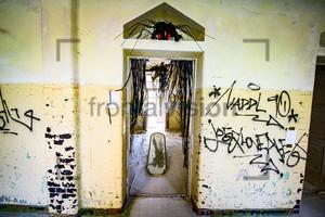 Spinne Heilstätte Grabowsee