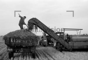 Erntehelfer 1961 | Seasonal worker 1961