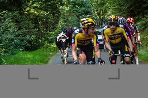 Cows in the Peloton: GP de Plouay - Men